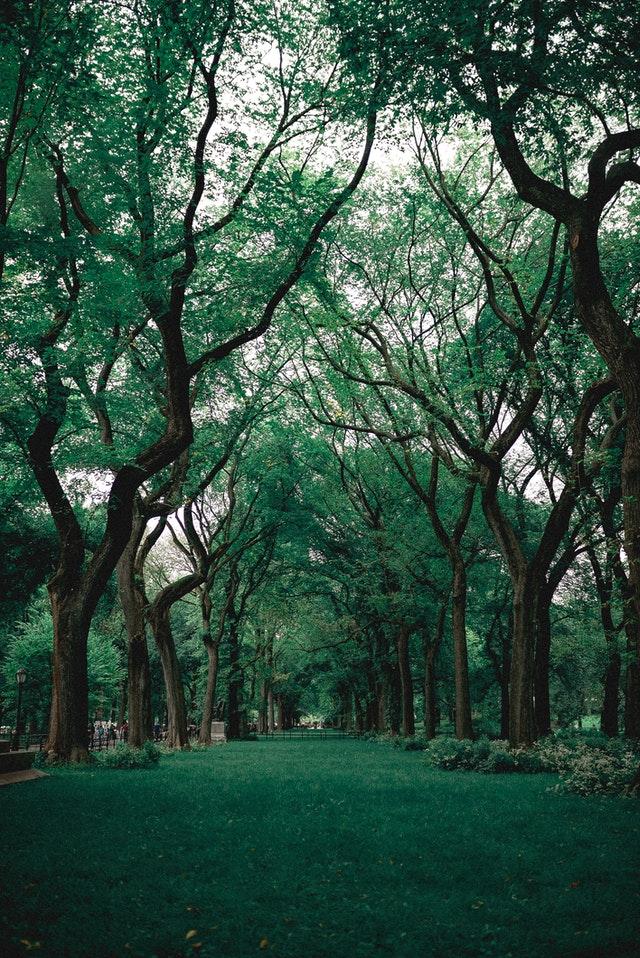 Alameda County Tree Service
